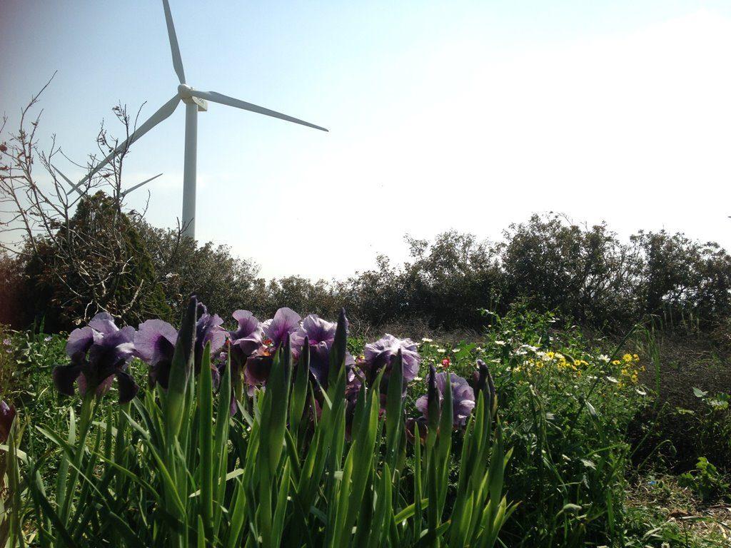 חוות הרוח בגלבוע